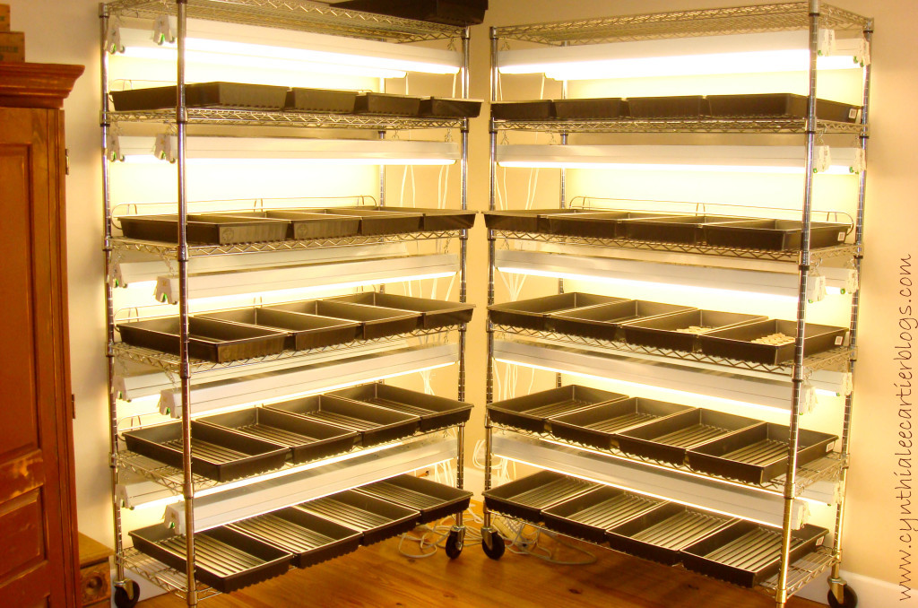GaGardening Ideas -- racks for growing transplants from seed