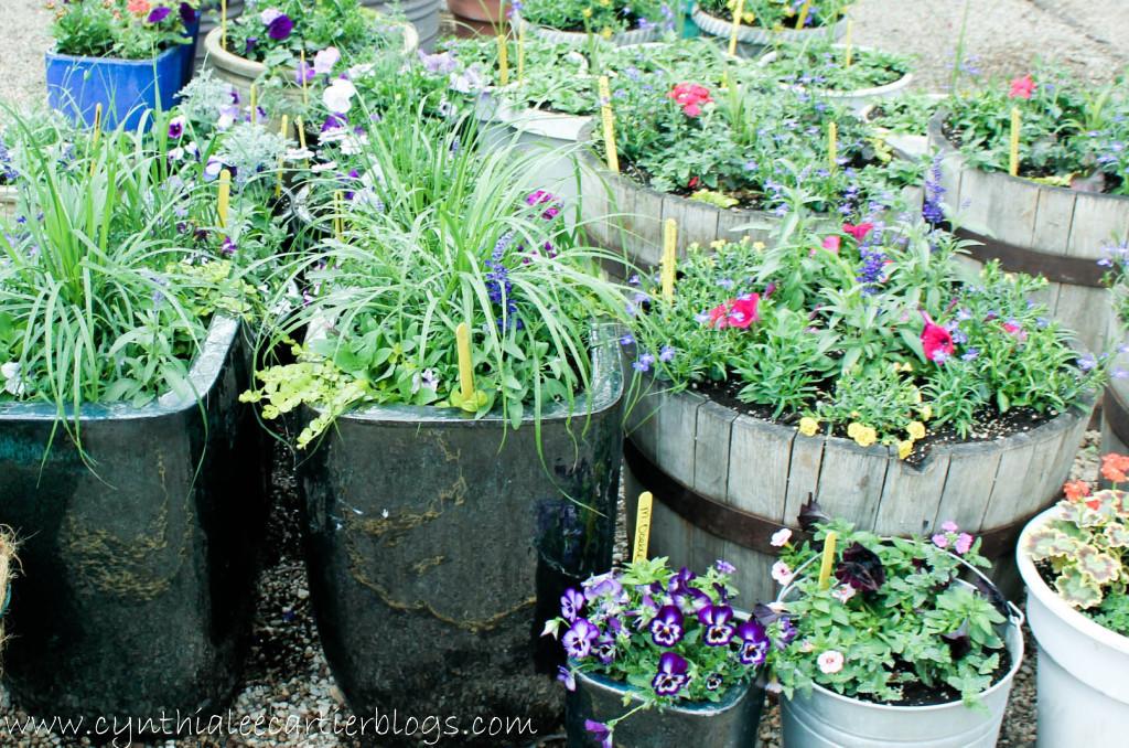 Lander Wyoming, Sprouts Garden Center: Custom Flower Pots