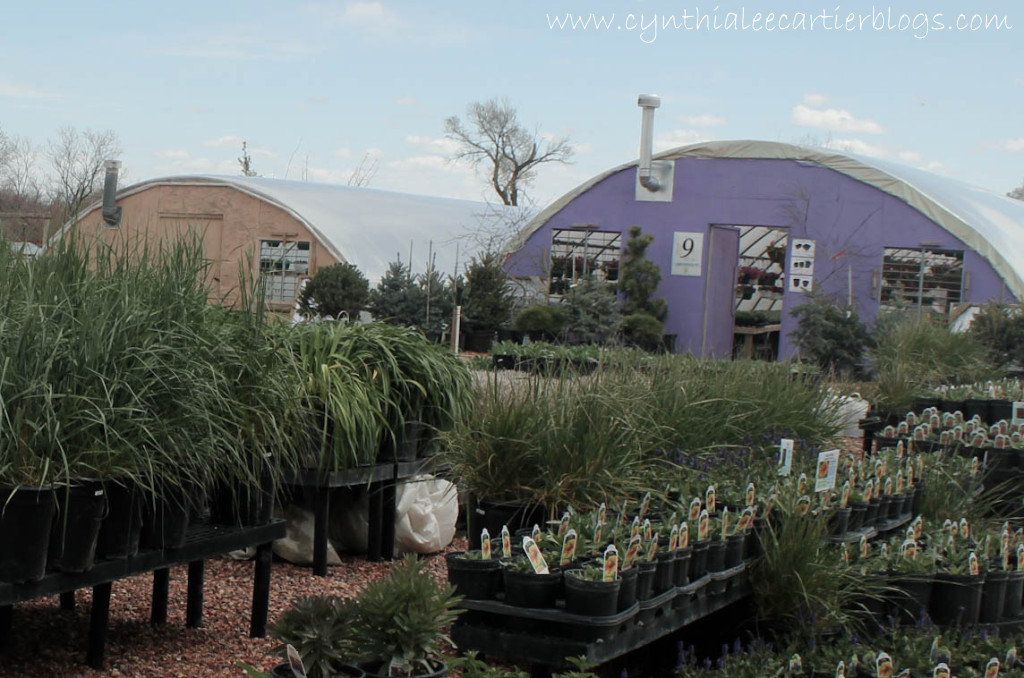 Lander Wyoming, Sprouts Garden Center: Perennial Grasses