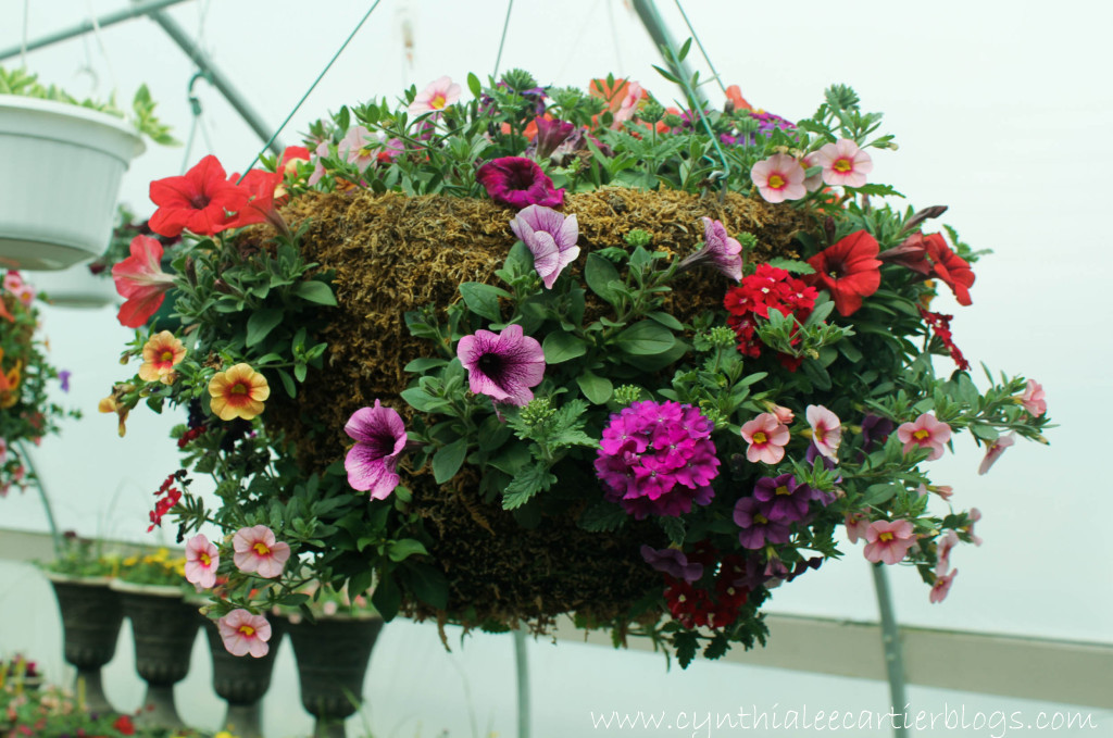 Lander Wyoming, Sprouts Garden Center: Hanging Flower Basket