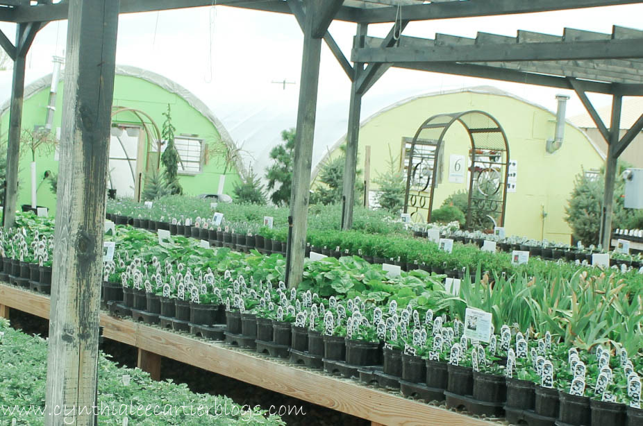 Lander Wyoming, Sprouts Garden Center: A beautiful garden center with lots of variety.