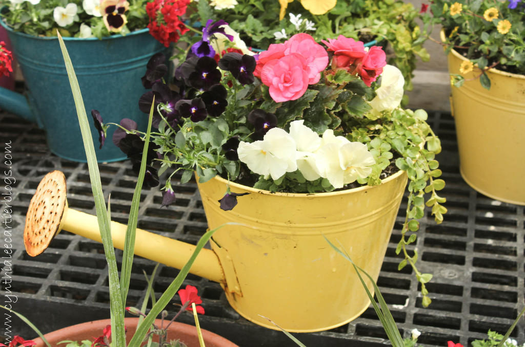 Lander Wyoming, Sprouts Garden Center: Watering Can Planter